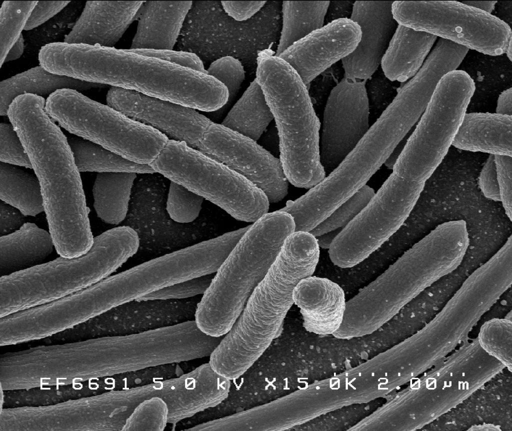Bactéria 1